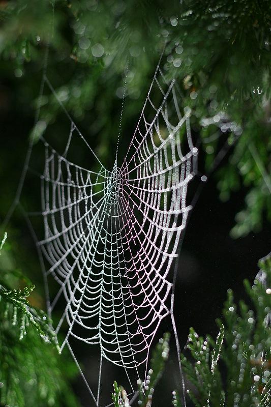 toile d'araignée photographiée au 50mm à contrejour