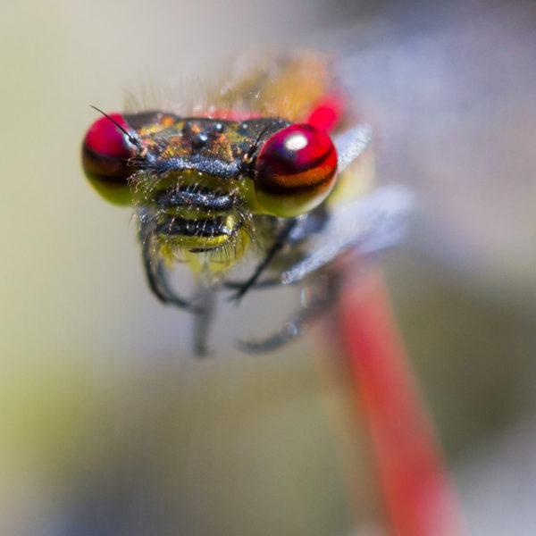 macro-sebastien-huruguen-photographe (2)